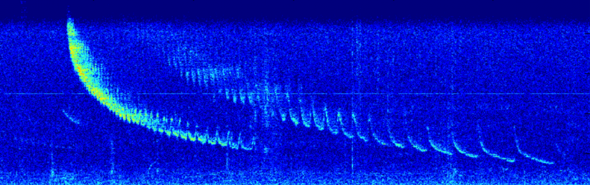 Bearded seal spectrogram